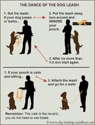 teach a dog to dance